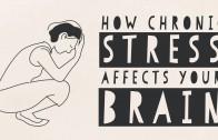 Hoe stress het brein aantast