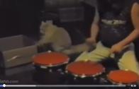 Drummen met je kat