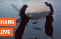 Duiker en haai zijn beste vrienden