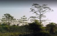 De bosjesman plant vrolijk verder