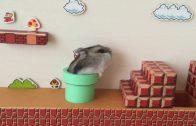 Hamster doet Mario