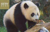 Panda viert eerste verjaardag