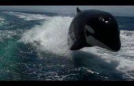 Koppel wordt verrast door orca's
