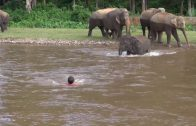 Olifant red man uit sterke stroming