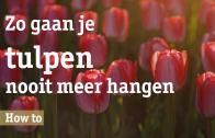 Zo gaan tulpen nooit meer hangen