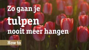 http://vnieuws.nl/wp-content/uploads/2018/04/Tulpen_Thumb_Tekengebied-1.png