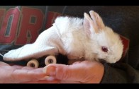 Schattig konijntje kan rondhoppen door skateboard