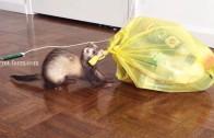 Fret helpt met het vuilnis