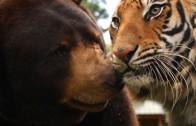 Liefde in het dierenrijk