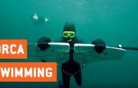 Zwemmen met orka's