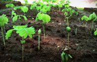 Hoe groei je een bos in je achtertuin?