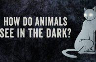 Hoe zien dieren in het donker?