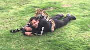 Kroelen met een jaguar