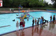 Honden zwemmen in Openluchtzwembad Rheden