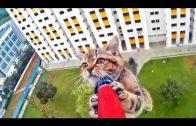 Kat wordt gered van 12 hoog
